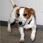 Foto af Molly, Børnehusets Hund