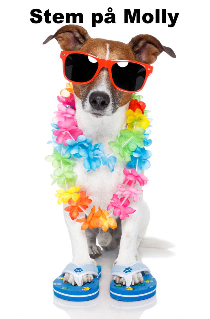 Foto af Molly, Børnehusets Hund med solbriller på.